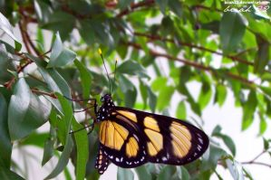 Close Butterfly by biiah22
