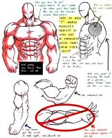 "How ""I"" draw muscles by Dokuro"