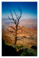 Grand Canyon - 12 - Outcast by michaeltoe
