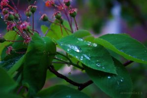 After the Rain 4 by amosis55