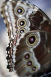 Spotted Butterfly Wings by TinyCueCard