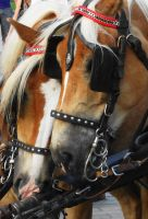 horses1 by Judofighter78