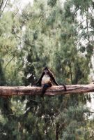 Spider Monkey by deliquescing