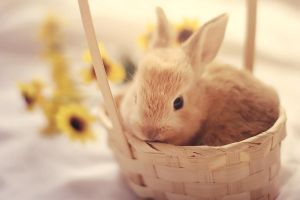 Bunny in a basket by aoao2