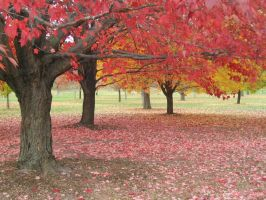 Fall at the Arboretum by solyluna