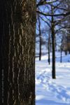 half a week before the winter. by Eunelia