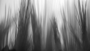 Spines I by PamplemousseCeil