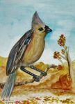 Tufted Titmouse in Autumn by SpiderMilkshake