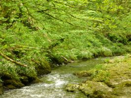 Lydford Gorge: View 150 by yaschaeffer
