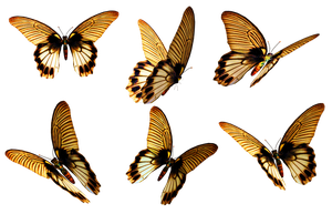 Butterflies 6 PNG Stock by Roys-Art