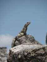 Lizard by ItsAllStock