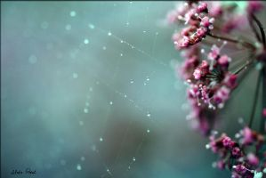 macro flower and drops by Zlata-Petal