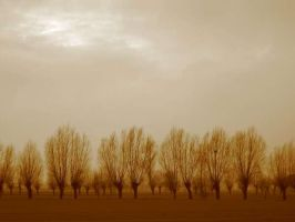 Trees of the Veneto by thebardsdotnet