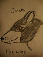 Java Foxwing by Kcook6