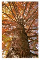 autumn tree by ine87