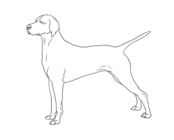 Hungarian Vizsla Line-Art by DoggieDoodles