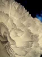 paper structure by vapeur