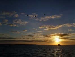 Pelican sunset by jayshree