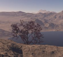 One tree in a very dry place by MariaFuchs
