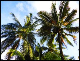 Coconut Trees by AppleLily