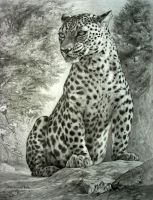 leopard by george-roth