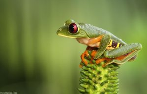 On Guard by erezmarom