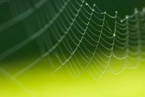 The Webs You Weave by TaGiRoCkS