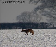 Fox In The Snow by 001mark