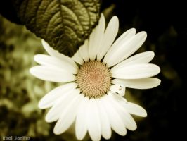 _CamomilE_ by Real-Janifer
