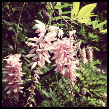Botanic Gardens, flowers by TheDesignRacoon