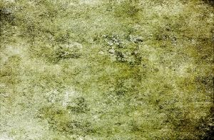 Mossy Rock by CL-Stock