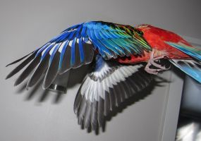 Parrot1 by Skudde-Textures