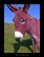 she's the donkey by ad-shor