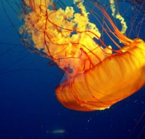 Jellyfish NO3 by samspot8r8s