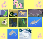 Fluttershy's Wild Kratts Animal Friends 3 by samanthasonic97