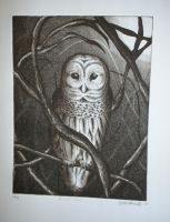 barred owl by katchup