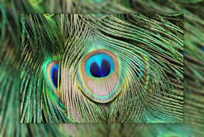 Peacock Feather by Joe-Lynn-Design