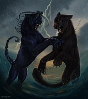 The last shot by FlashW