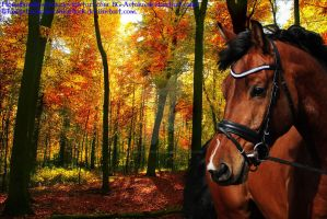 Autumn Gold by LisasAmazingStock