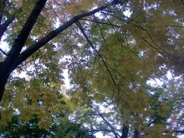 Pale Yellow Leaves by penny-duchess-stock