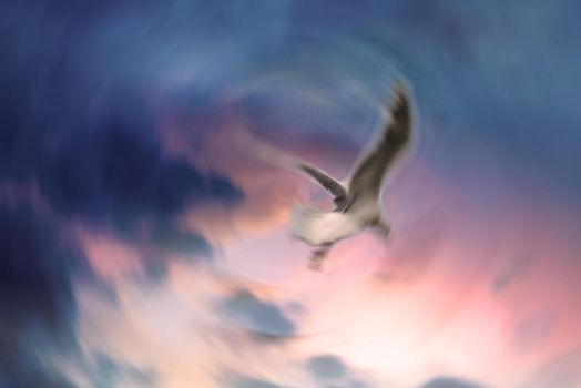 Whirligig Seagull by JtheQ