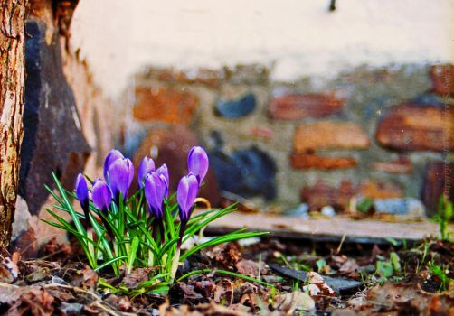 The Sign of Spring by bulloney