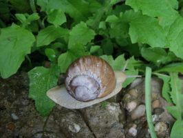 Snail on garden stones by Mecarion