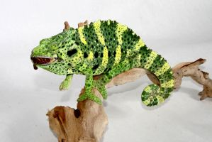 Meller's Chameleon by pdxcabby