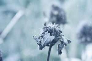 When The Frost Comes Falling Down by ElyneNoir