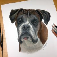 Dog Pencil Portrait by AtomiccircuS