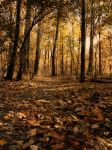 Forest in the Autumn by SEnigmaticX