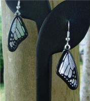 Silver Glass Wing Earrings by FusedElegance