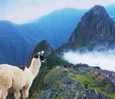 Early Morning at Machu Picchu by RockyMtnMinnie