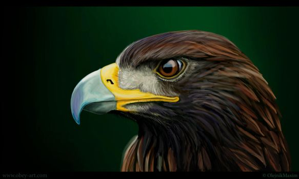 Speed paint - Eagle by Obey-art